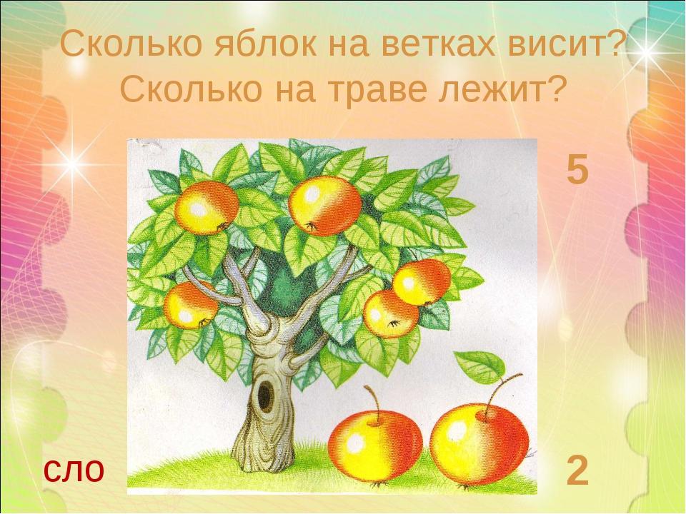 Сколько яблок на ветках висит? Сколько на траве лежит? 5 2 сло