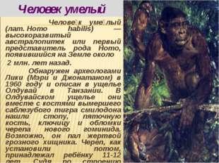 Челове́к уме́лый (лат.Homo habilis) — высокоразвитый австралопитек или перв