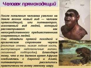 После появления человека умелого на Земле возник новый вид — человек прямоход