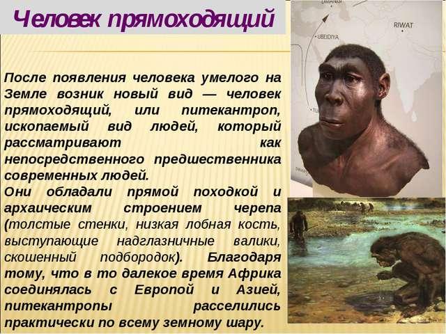 После появления человека умелого на Земле возник новый вид — человек прямоход...