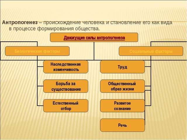 Антропогенез – происхождение человека и становление его как вида в процессе ф...