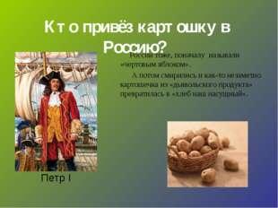 Кто привёз картошку в Россию? Петр I России тоже, поначалу называли «чертовы