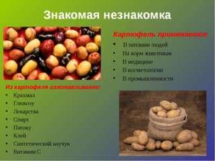 Знакомая незнакомка Картофель применяется В питании людей На корм животным В