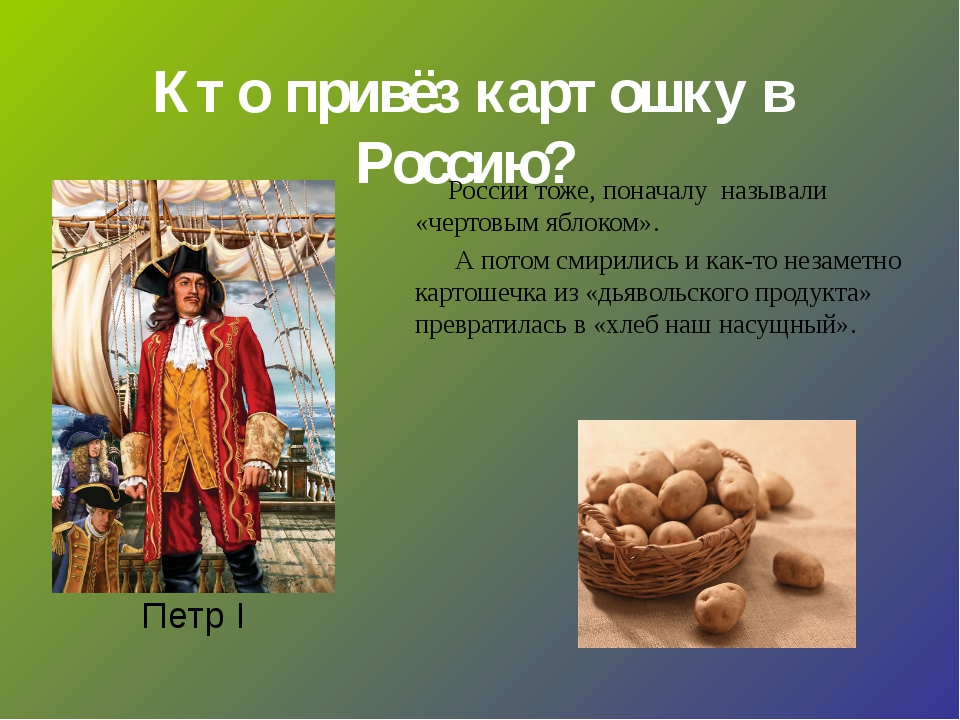 Кто привёз картошку в Россию? Петр I России тоже, поначалу называли «чертовы...