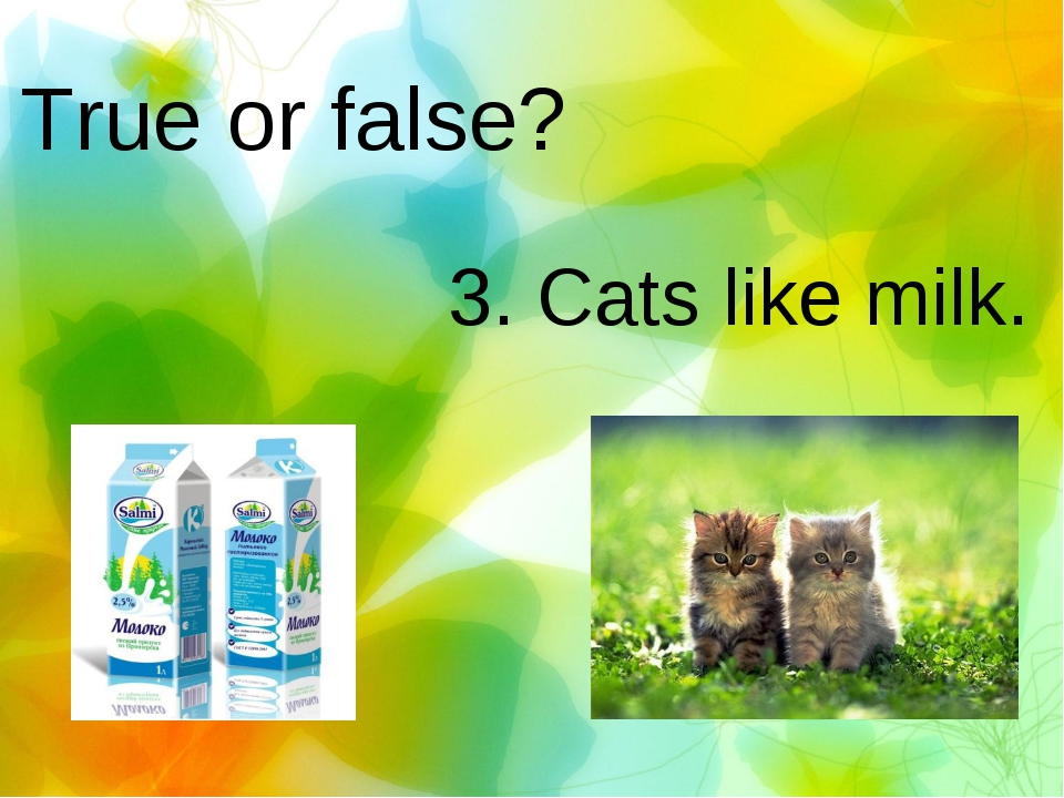 True or false? 3. Cats like milk.