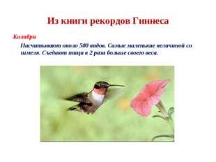 Из книги рекордов Гиннеса Колибри Насчитывают около 500 видов. Самые маленьки
