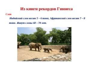Из книги рекордов Гиннеса Слон Индийский слон весит 5 – 6 тонн, Африканский с
