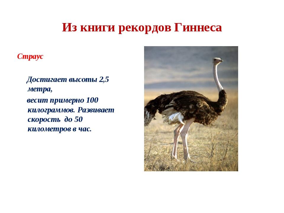 Из книги рекордов Гиннеса Страус Достигает высоты 2,5 метра, весит примерно 1...