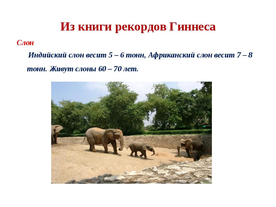 Из книги рекордов Гиннеса Слон Индийский слон весит 5 – 6 тонн, Африканский с...