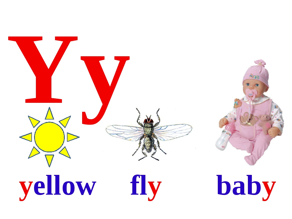 Yy yellow fly baby