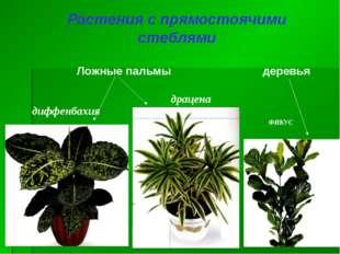 Растения с прямостоячими стеблями деревья Ложные пальмы диффенбахия драцена Ф