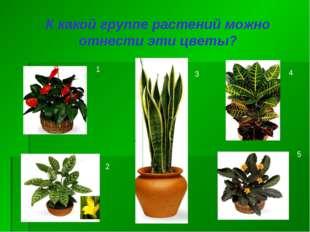 К какой группе растений можно отнести эти цветы? 1 2 3 4 5