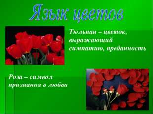 Тюльпан – цветок, выражающий симпатию, преданность Роза – символ признания в