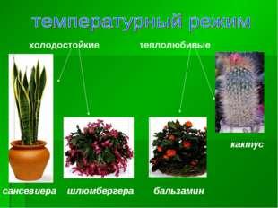 теплолюбивые холодостойкие сансевиера шлюмбергера бальзамин кактус