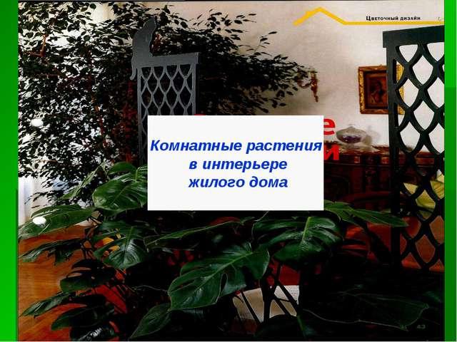 Комнатные растения в интерьере жилого дома