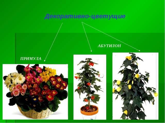 АБУТИЛОН ПРИМУЛА Декоративно-цветущие