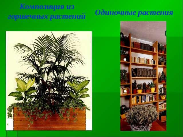 Композиция из горшечных растений Одиночные растения