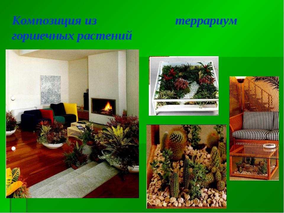 Композиция из горшечных растений террариум