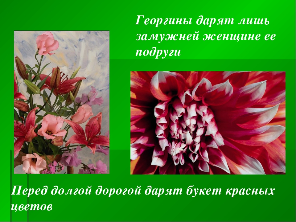 Перед долгой дорогой дарят букет красных цветов Георгины дарят лишь замужней...