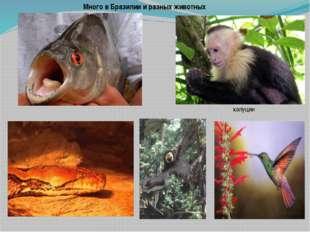 Много в Бразилии и разных животных капуцин