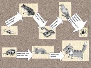 лягушки едят насекомых змеи (ужи) едят лягушек орел-змееяд ест змей насекомые
