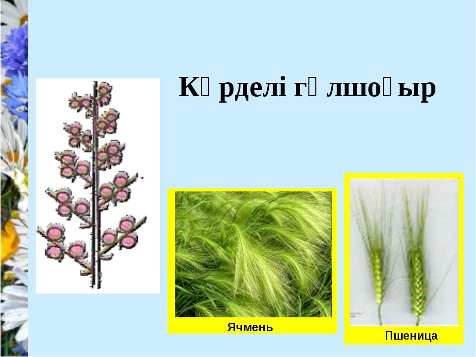 Пшеница Ячмень Күрделі гүлшоғыр