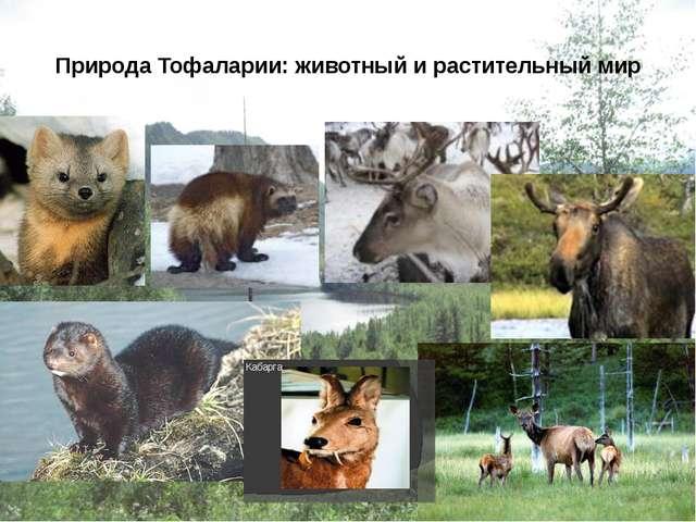 Природа Тофаларии: животный и растительный мир user: 1-соболь 2-росомаха 3-се...