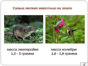 Самые мелкие животные на земле масса колибри 1,6 - 1,8 грамма масса землеройк