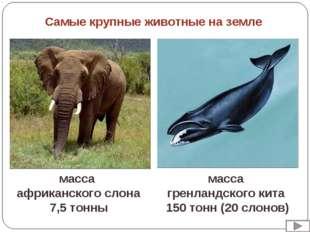 масса африканского слона 7,5 тонны масса гренландского кита 150 тонн (20 слон