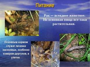 Питание Основным кормом служат личинки насекомых, особенно комаров-дергунов,