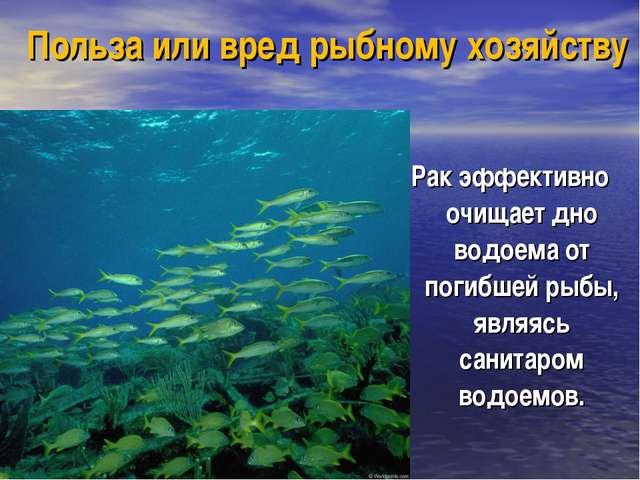 Польза или вред рыбному хозяйству Рак эффективно очищает дно водоема от погиб...
