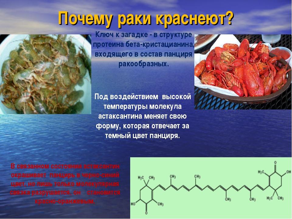 Почему раки краснеют? Под воздействием высокой температуры молекула астаксант...