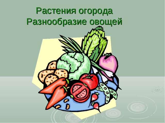 Растения огорода Разнообразие овощей