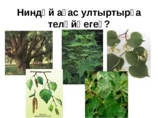 Ниндәй ағас ултыртырға теләйһегеҙ?