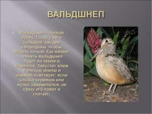 Вальдшнеп – лесной кулик. Глаза у него большие, как две смородины, чтобы виде