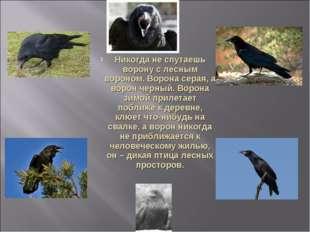 Никогда не спутаешь ворону с лесным вороном. Ворона серая, а ворон черный. Во