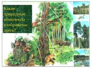Какие природные комплексы изображены здесь?