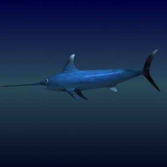 C:\Users\Admin\Desktop\В мире животных\правда ли это\меч-рыба.jpg
