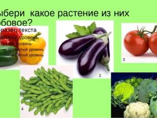 Выбери какое растение из них бобовое? 1 2 3 4 5