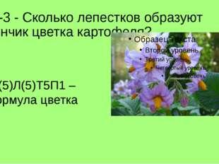 Л -3 - Сколько лепестков образуют венчик цветка картофеля? *Ч(5)Л(5)Т5П1 – фо
