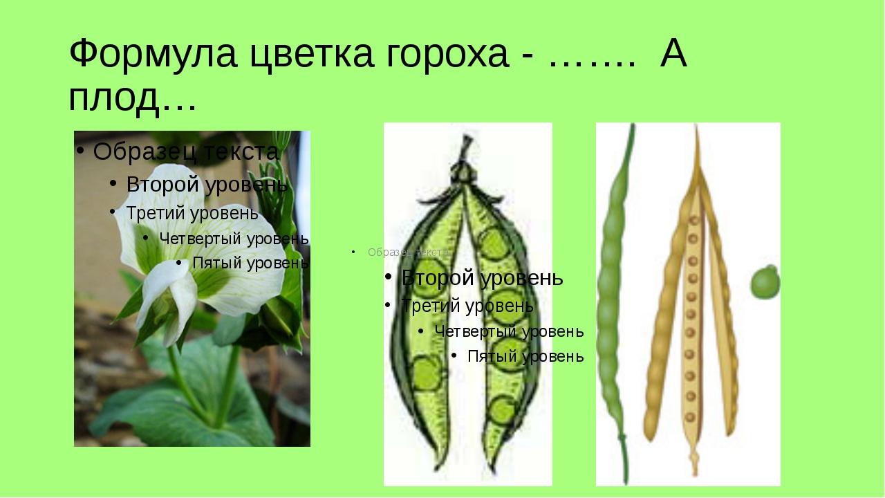 Формула цветка гороха - ……. А плод…