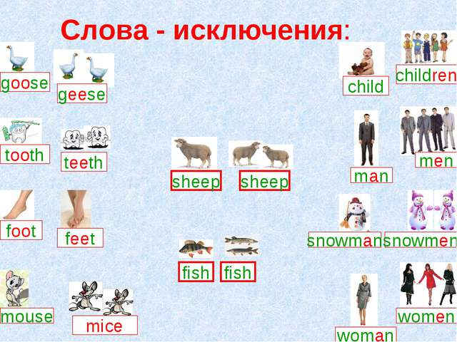 Слова - исключения: goose feet foot mice mouse child children man men snowman...