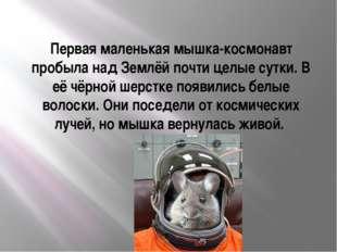 Первая маленькая мышка-космонавт пробыла над Землёй почти целые сутки. В её ч