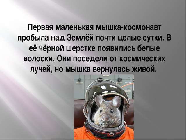 Первая маленькая мышка-космонавт пробыла над Землёй почти целые сутки. В её ч...