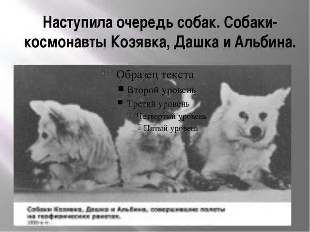 Наступила очередь собак. Собаки-космонавтыКозявка, Дашка и Альбина.