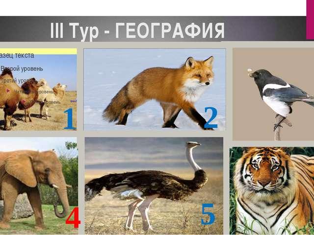 III Тур - ГЕОГРАФИЯ 1 2 3 4 5 6