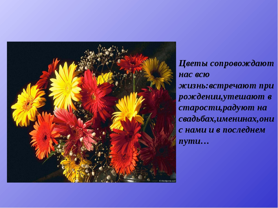 Цветы сопровождают нас всю жизнь:встречают при рождении,утешают в старости,ра...