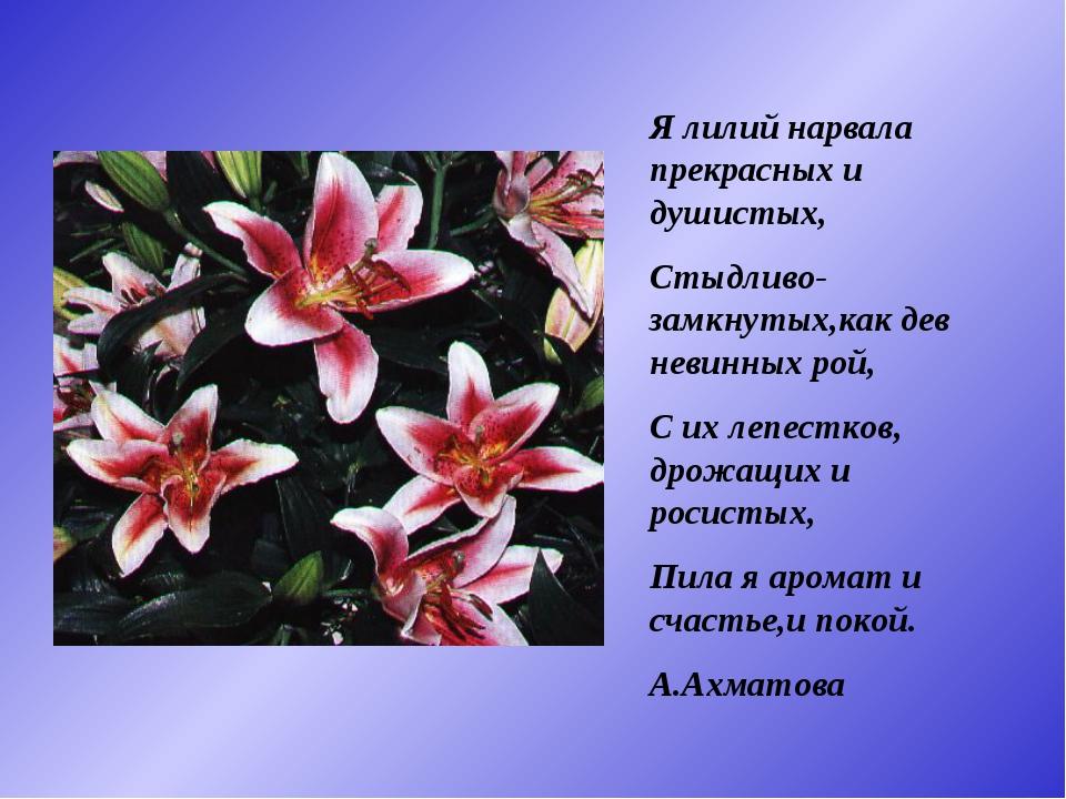 Я лилий нарвала прекрасных и душистых, Стыдливо-замкнутых,как дев невинных ро...