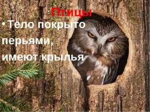 Птицы Тело покрыто перьями, имеют крылья