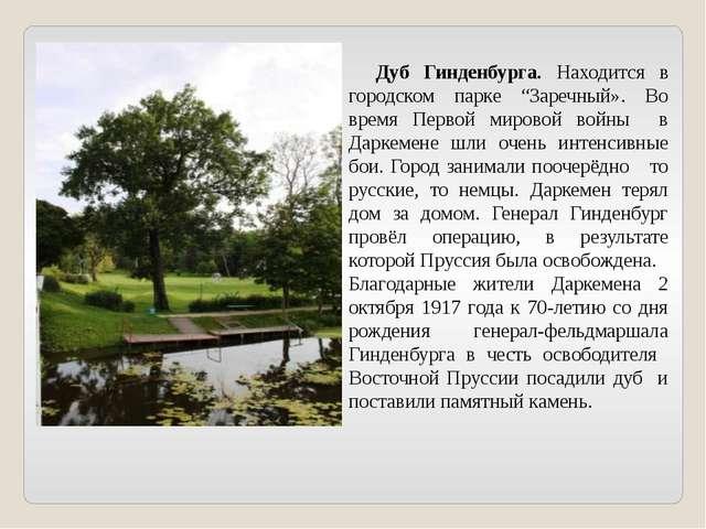 """Дуб Гинденбурга. Находится в городском парке """"Заречный». Во время Первой мир..."""